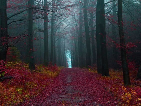 Autumn Woods, Germany  Photograph by Jonathan Manshack