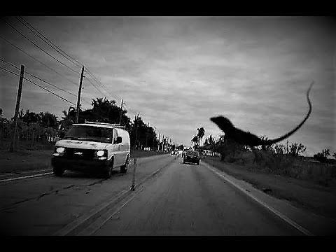 5 Dinosaurios Captados En Camara Y Vistos En La Vida Real Los Mas Top 10 Youtube La Vida Real Vida La Vida Te Sorprende ¿eran realmente inteligentes los dinosaurios? dinosaurios captados en camara y vistos
