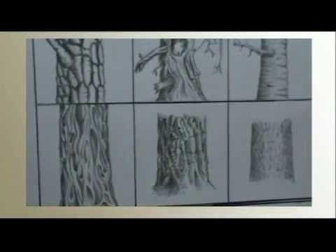 Come imparare a disegnare un albero - YouTube
