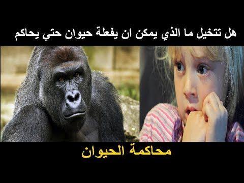 حيوانات تم محاكمتهم في القرون الوسطي غرائب وعجائب Animals Gorilla Trials