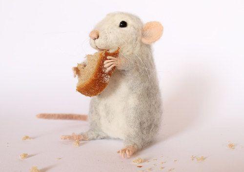 Malý, stále hladový potkánek. :)
