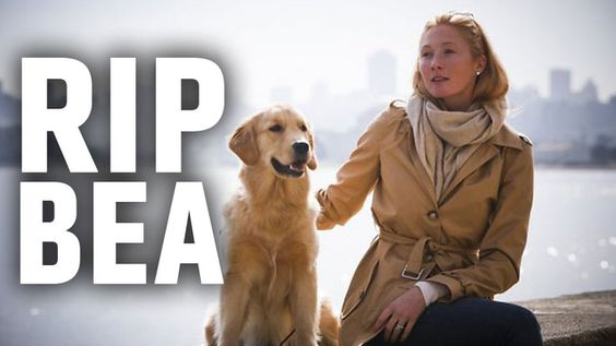 How United Airlines Killed A Supermodel's Dog