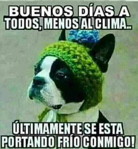Buenos Dias Imagenes Chistosas De Frio Buenos Dias Con Humor Imagenes De Frio