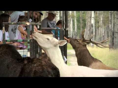 Outdoor Activities and Wilderness Tours - Cedar Meadows Resort & Spa