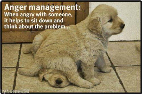 Details About Funny Dog Humor Anger Management Refrigerator Magnet