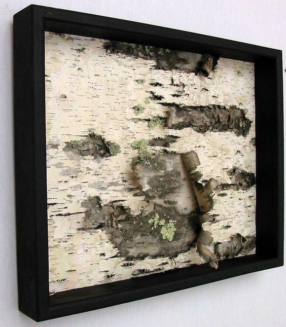 Framed Birch Bark- I love birch!  Algonquin Park...: