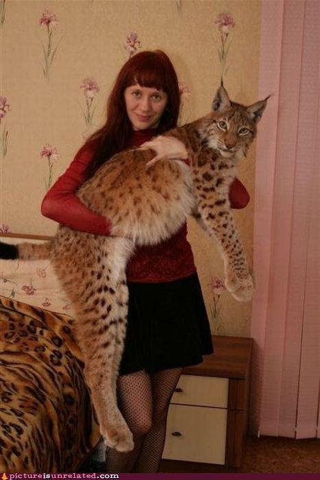 sevgili günlük - Lynx ... Büyük kedileri evcil hayvanlar gibi tutmak için sadece zulüm.  ~ millie ilk
