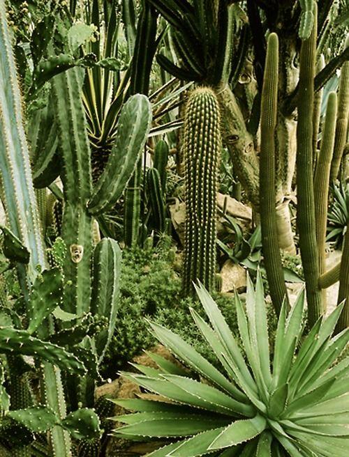 cacti dreams #landscape #plants: