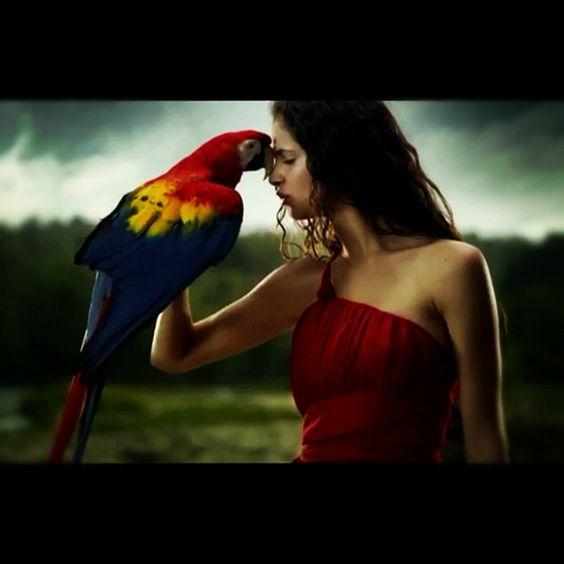 #bird #animal #edwardmaya #violet #lovestory #mexico #tribute