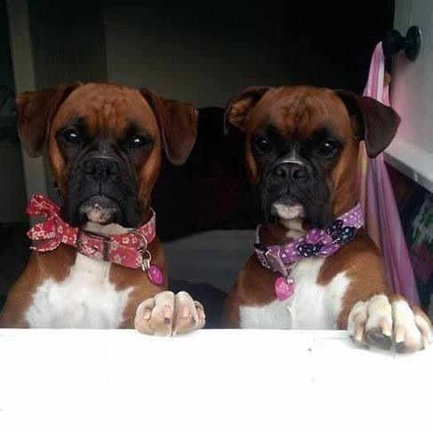 Twins! :-)