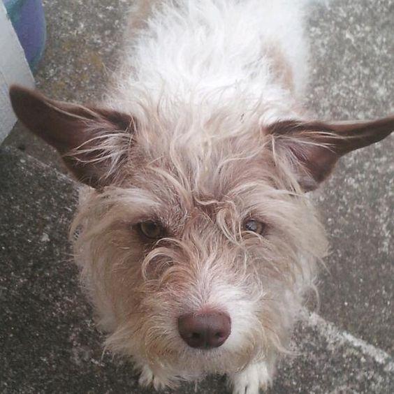 Shelter dog rescue #1
