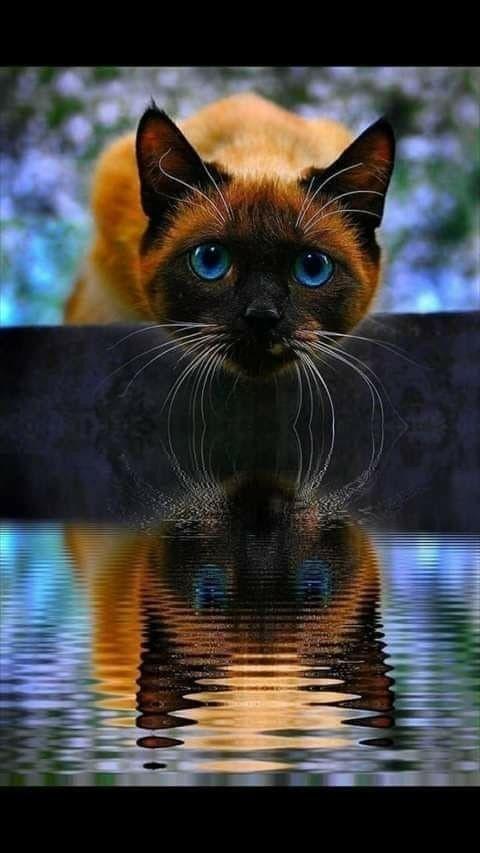 Pin Von Raelynn Maxwell Auf Katzen Katzen Fotos Katzen Seltsame Katzen