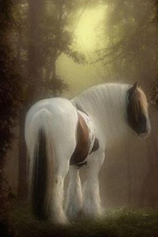 Beautiful horse in the morning fog