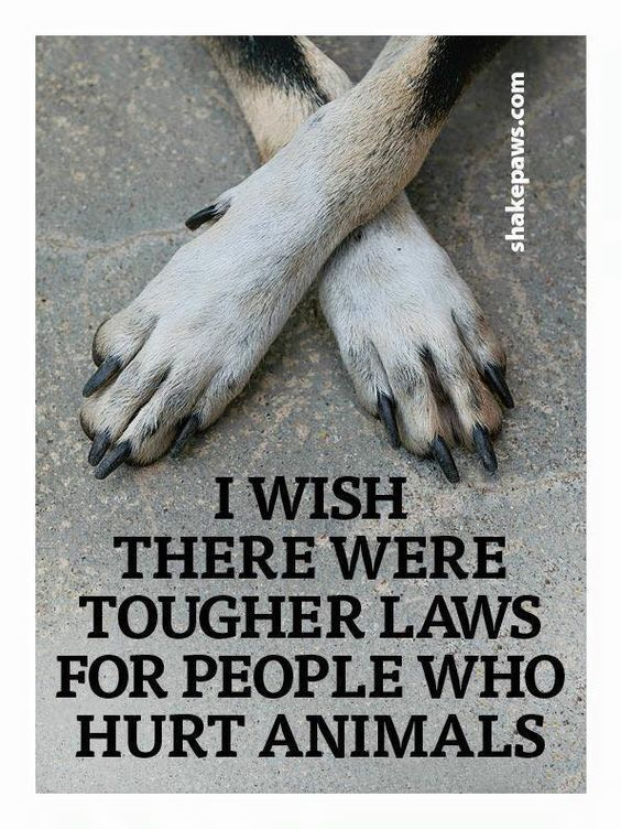 My dad would be in jail thank god I hate when he kicks my puppy because he growls at he I would to he has kicked you before