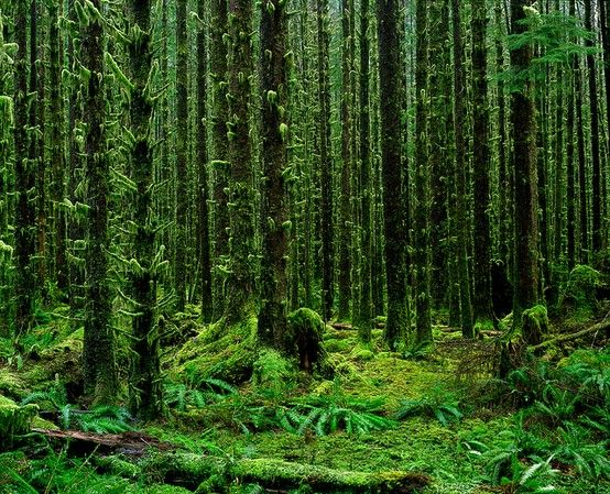 Temperate rainforests are the best!