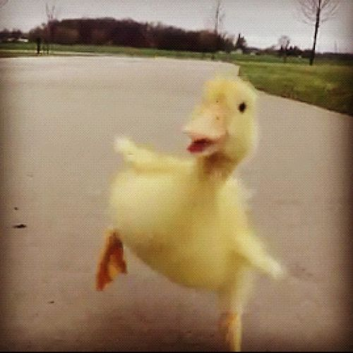 Precious little duckling from YouTube