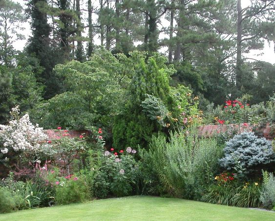 Gardens trees and google on pinterest for Garden law trees