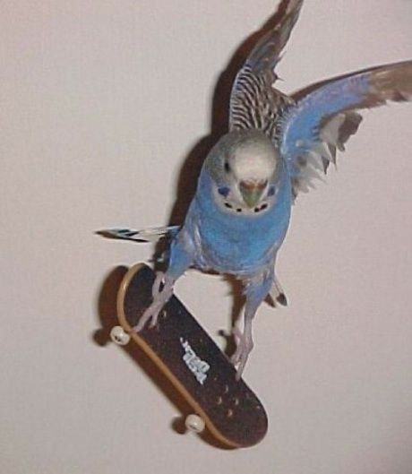 boarding is easy - even bird can do it.
