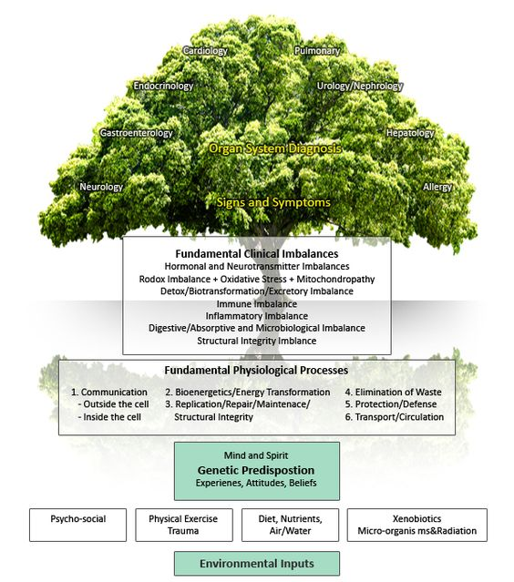 Functional Medicine Infographic . . . .