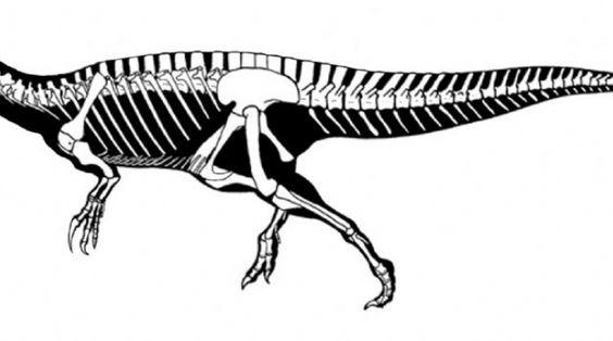http://www.rocadigital.com.ar/sociedad/2014/6/23/descubren-nuevo-tiranosaurio-criollo-32324.html De acordo com o texto o Megaraptor seria um grande dinossauro, robusto, com caracteristicas de um tyranossauro.(a imagem e de um exemplar juvenil)