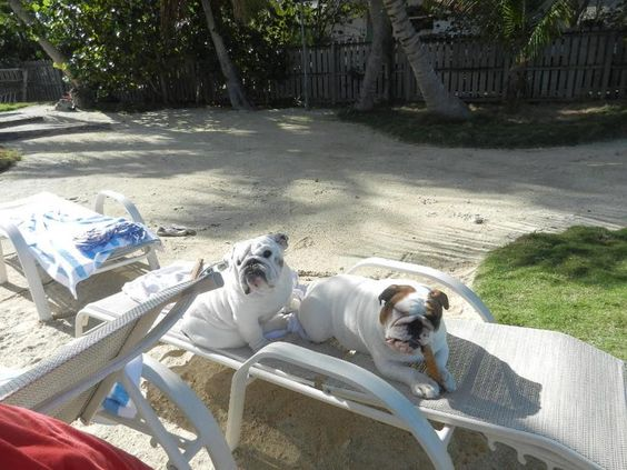 """""""We think warm vacations in the winter are Grrrrreat !! We think they should last longer!"""