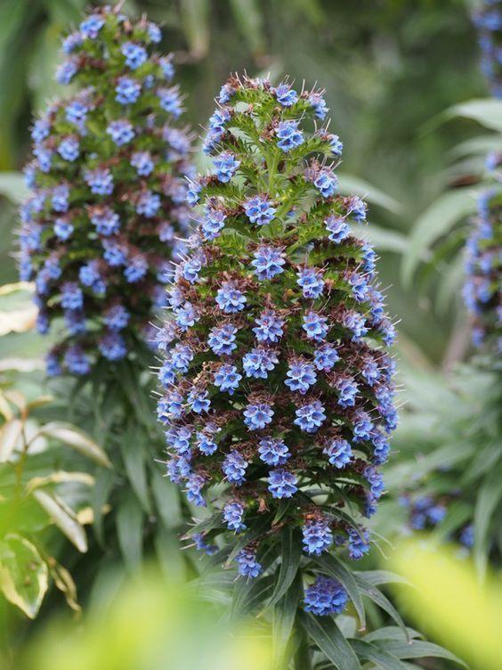 Dans le jardin exotique de l'île de Batz,Bretagne.