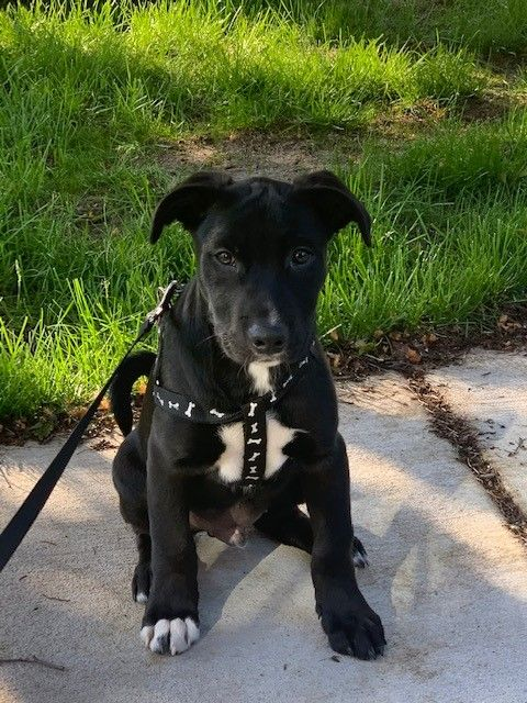 Adoptable Dogs Mn Animal Rescue Wags Whiskers Animal Rescue In 2020 Dog Adoption Animals Animal Rescue