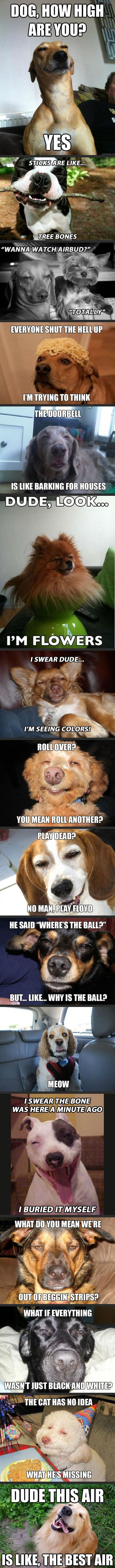 """Hahahahahaha omg. """"Roll over? You mean roll another?"""" Looks just like a blonde lulu!!!!"""