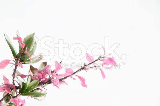 Flower in white - fotografia de stock royalty-free