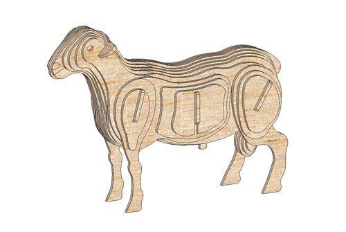 Dorper Ram