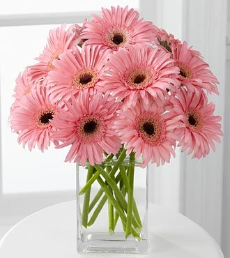 pink gerbera daisy .... just a little tip - change the water daily with Gerberas....they HATE dirty water! and only  cut stems with a sharp knife!