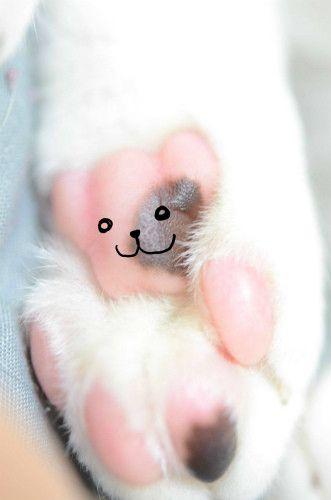 【激萌え注意】猫の肉球をクマにしてみた | マイナビニュース