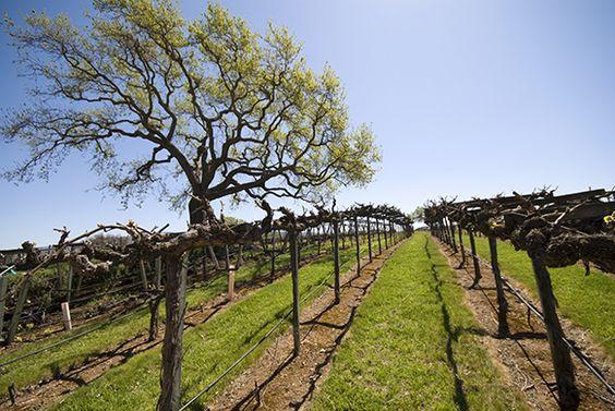 Les trésors vinicoles de Santa Barbara