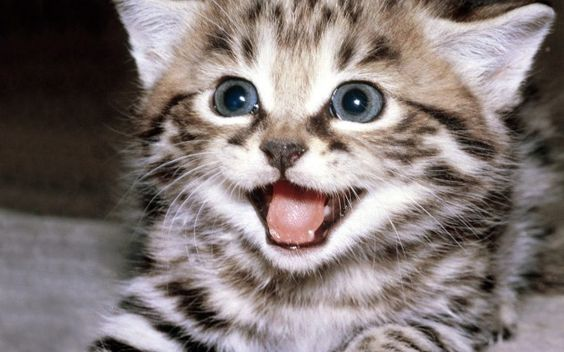 24 Awesome Pictures of the Smiliest Cats Ever - We Love Cats and Kittens