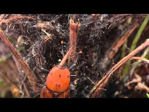 Pin En Enfermedades De Plantas Y árboles