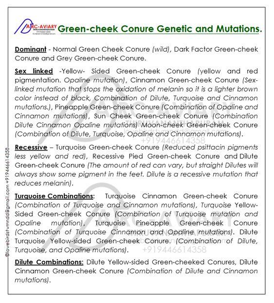 Akhilchandrika : Green-cheek Conure genetic and mutations: