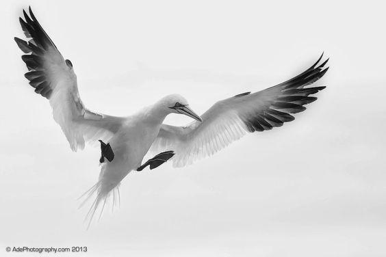 Pronto para voar, então é preciso abrir as asas..