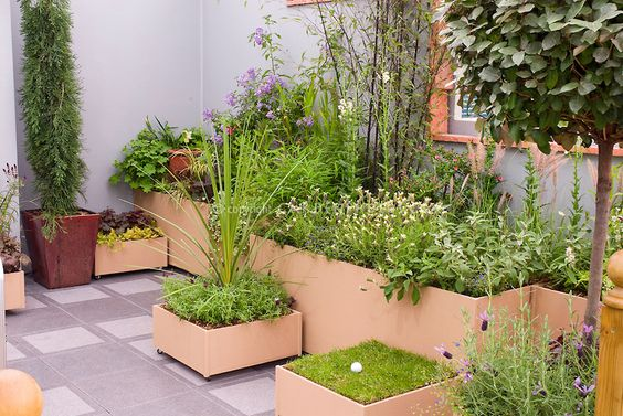 Privacy Walls Perennial Plant And Outdoor Rooms On Pinterest