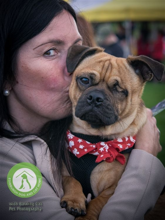 Pin By Barking Cat Pet Photography On Doggos Pet Photographer Mini Photo Sessions Cool Pets