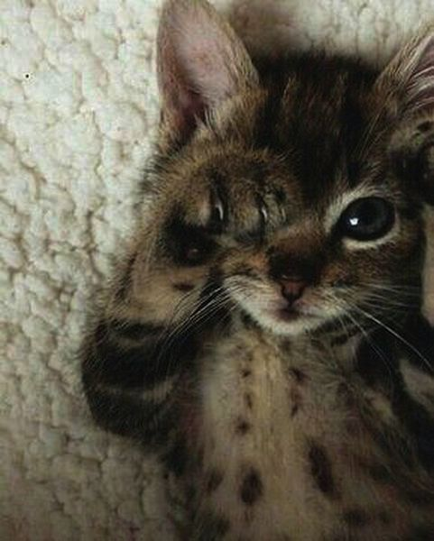 Cutest Kittens And Cats Except Cute Animals Funny Videos Download At Too Cute Ki Kittens Cutest Animals Cats Cu Kittens Cutest Cute Animals Animals
