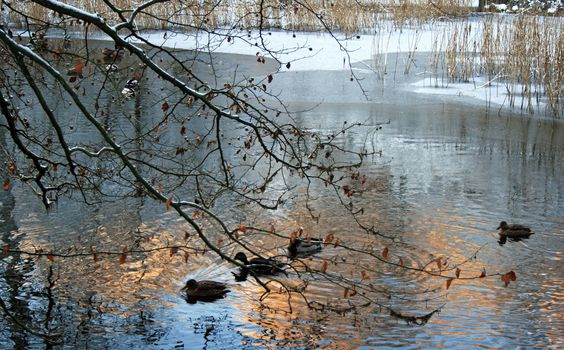 © crucifix marielle #winter#snow#parcsolvay#forêtdesoignes#white#frost#duck#water