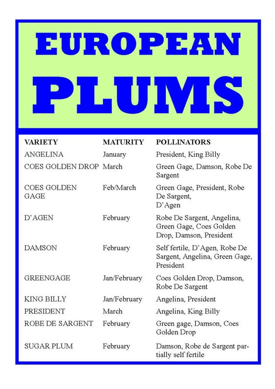 001 Plum varieties and Charts on Pinterest