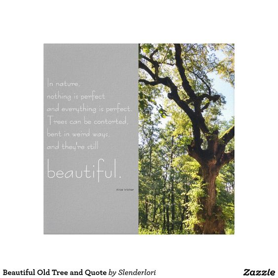Print of a beautiful old tree and a Quote by Alice Walker