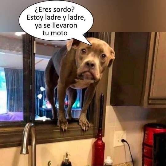 Pin By Michelle Rosales On Fotos Jajaja Memes Animals Funny
