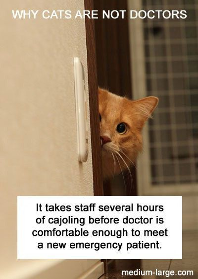 why cats are not doctors: Cats Cats, Cats Little, Funny Cats, Cat Doctor Shy Ml Jpg 400, Cats Dogs, Funny Animal, Can T Cats, Cats Blog, Cat Doctors