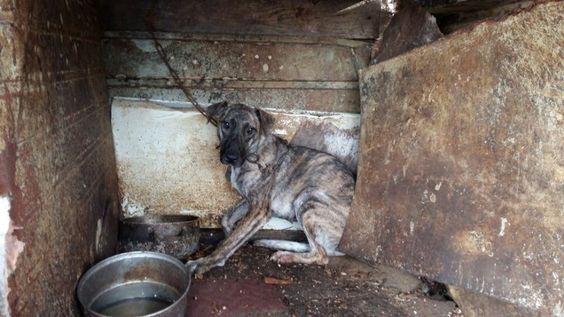 Pétition · Ansan Mayor Jong-Gil Jae: Close down the illegal dog farm in Danwon-gu District in Ansan now! · Change.org