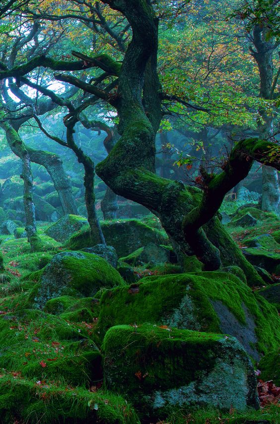 Padley Gorge is a deep but narrow valley in the Peak District, Derbyshire, England