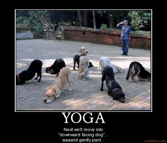 """Next we'll move into Downward Facing Dog...aaand gently pant."""