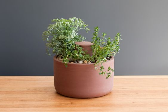 Planter by Joey Roth. The planter's naturally porous earthenware allows water in the central chamber to seep into the surrounding soil. The plant's need for water regulates this capillary action. $45