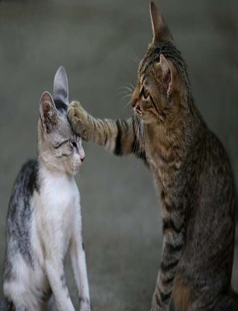 Two Cats Playing Funny Funny Animals Kittens Cutest Pets Cats